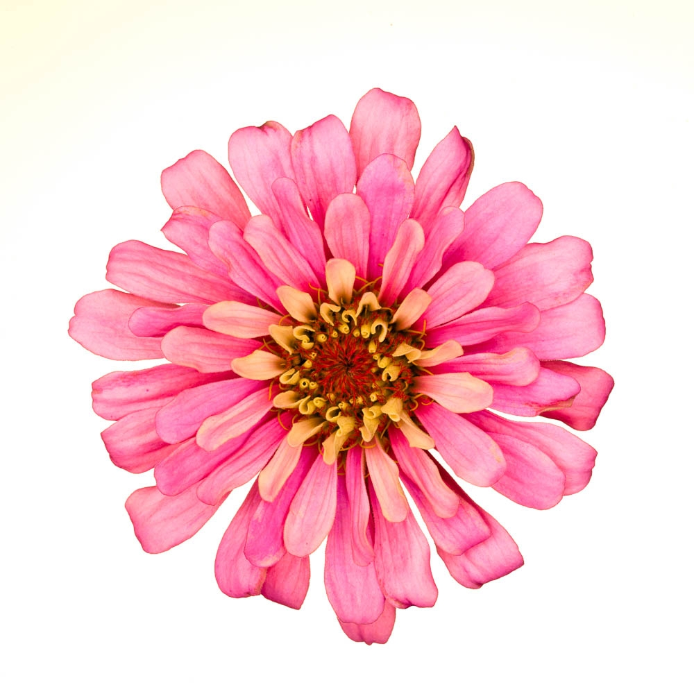 flowers-122-Edit