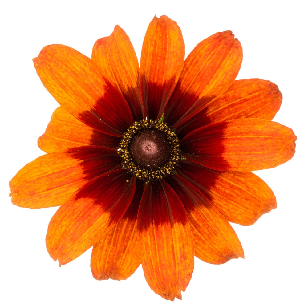 flowers-136-Edit